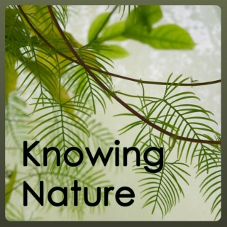 Knowing Nature Podcast - Logo